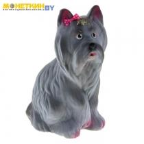 Копилка «Собака Йорк» серый