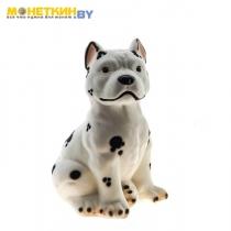 Копилка «Собака Питбуль» белый долматинец