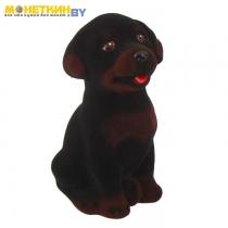 Копилка «Собака Ротвейлер» малый