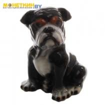 Копилка «Собака Бульдог» большой черный глянцевый