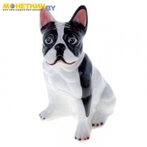 Копилка «Собака Французский Бульдог» большой глянец бело – черный