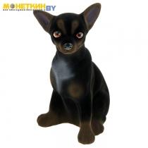 Копилка «Собака Чихуахуа» черно