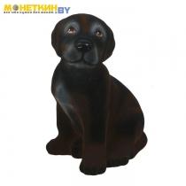 Копилка «Собака Лабрадор» черный